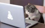 고양이가 씀.jpg