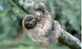 나무늘보.jpg