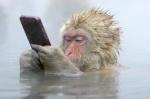 일본원숭이.jpg