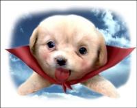 flydog.jpg